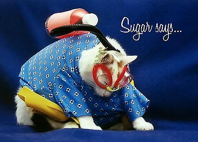 SUGAR Says FAT CAT  MODEL INSPIRATIONAL ENCOURAGEMENT Greeting Card SCUBA DIVER