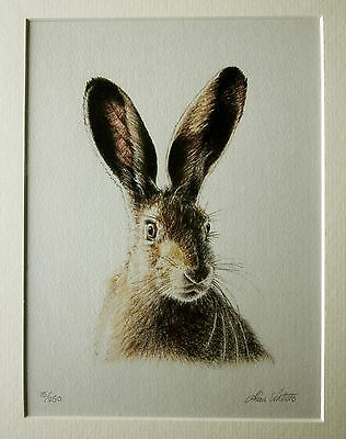 Limited edition signed colour pencil drawing of a brown hare