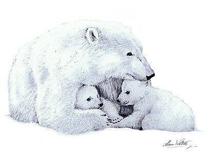 Limited edition signed pencil drawing, a polar bear and her cubs 'Motherly Love'