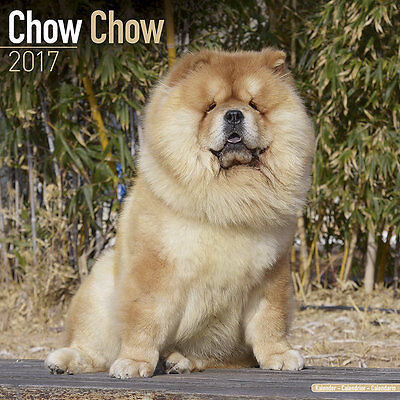 Calendrier 2017 - CHOW CHOW