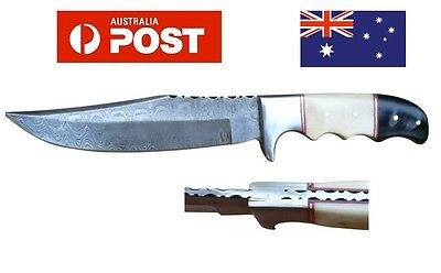 AUSSIE Hand Made Genuine Damascus Steel Hunting Knife Horn Handle Brass Bolster