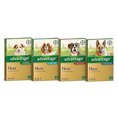 Advantage for Dogs 6 Pack - Kills Fleas Fast - All Sizes Available