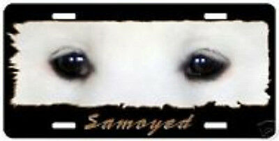 """Samoyed  """" The Eyes Have It """"  License Plate"""