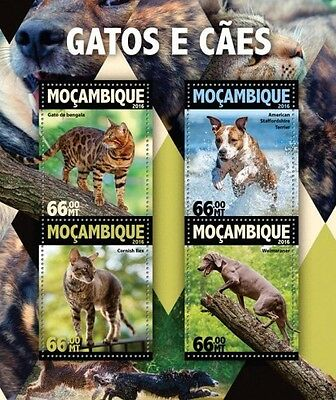 Z08 MOZ16108a MOZAMBIQUE 2016 Dogs and Cats MNH