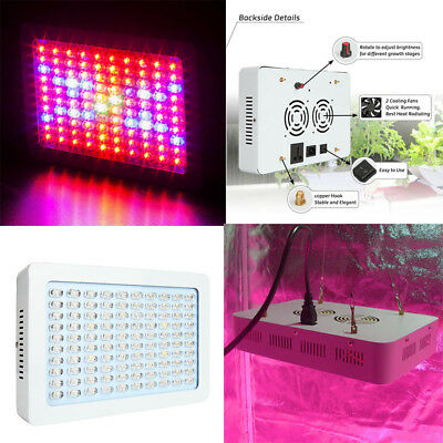 300W Wifi Control Full Spectrum Hydro LED grow light for greenhous plants fruit