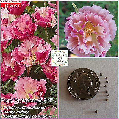 25 Californian Poppy Appleblossom Pink Seeds(Eschscholzia californica)