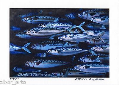 MACKEREL : 5x7 PRINT of OIL PAINTING : Fishing Limited Edition Art David Andrews