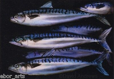 MACKEREL SHOAL : 5x7 PRINT : OIL PAINTING : Fishing Limited Edition Art Andrews
