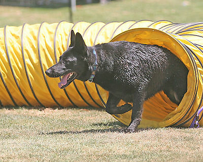 "New 15' Tough Vinyl Dog Agility Equipment Tunnel (6 ""spacing)"