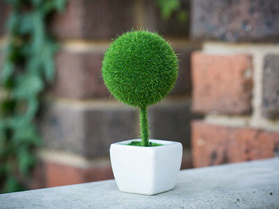 Artificial Ball Head Potted Bonzai Plant Succulent Home Office Table Decor