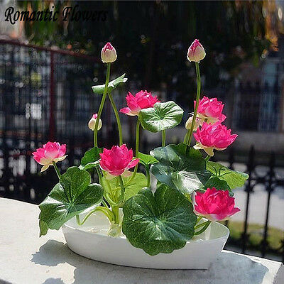 20 Pcs Small WATER LILY Mini LOTUS Seeds, Flower Bonsai MIX COLOR