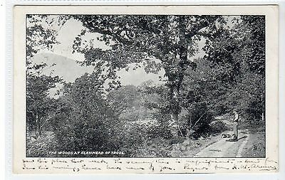 THE WOODS AT GLENHEAD OF TROOL, NEWTON STEWART: Wigtownshire postcard (C20680)