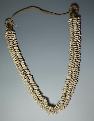 African Tribal Art Fine Large Cowrie Currency Necklace