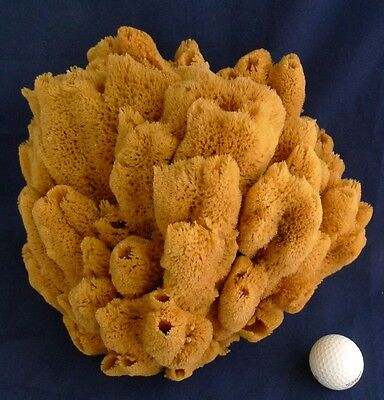 Huge Uniquely shaped Nautical Theme Deco bath Sea Sponge 40X90 14''