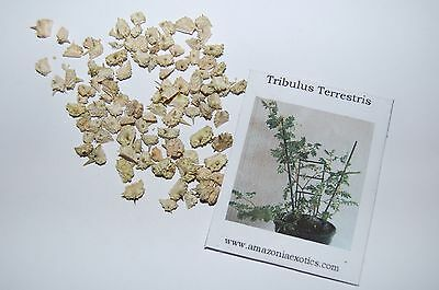 Tribulus Terrestris Seeds-Puncturevine-Easy To Grow-Seed Packet 30+ Seeds
