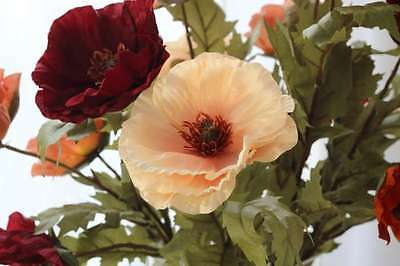 Bunch of 6 Single Poppy with two flower heads!