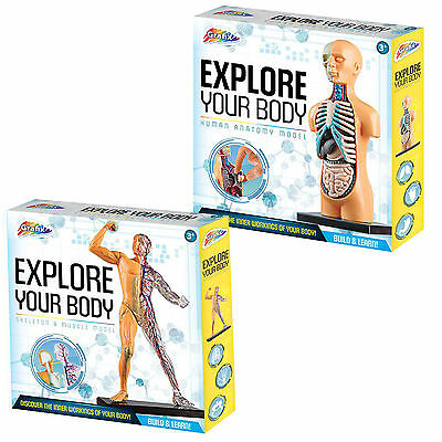 Grafix Explore your Body - Build & Learn - Human Anatomy or Skeleton Muscle