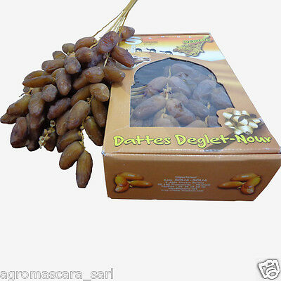 5 kg Fresh Original Algerian Deglet Noor dates on the vine branches HIGH QUALITY