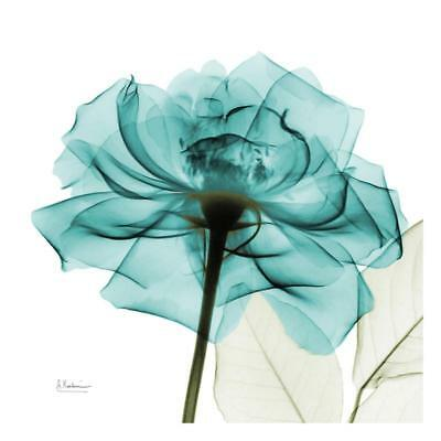 Teal Rose Art Print by Koetsier, Albert Wall Decor Art Home New