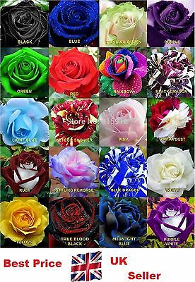 35x Rare Multi-Colors Rainbow Rose Flower Seeds Garden Plant, Other Colors