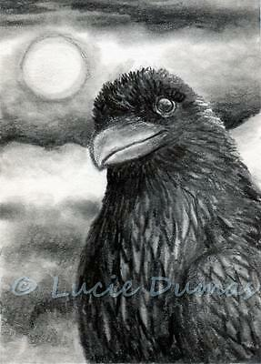 ACEO art print Bird 64 Crow Raven from original painting by L.Dumas