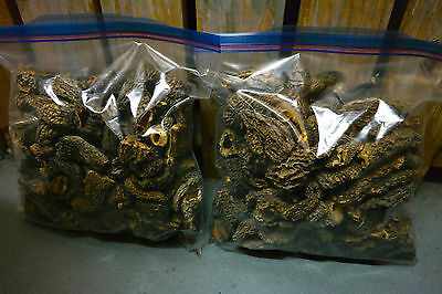 Premium Morel Mushrooms *BLOWOUT SALE* Whole & Unwhole - Special Grade - 10 lbs