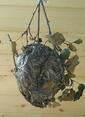 Large Hornet's Nest Wasp Yellow Jacket With Branch & Leaves Northern Hive