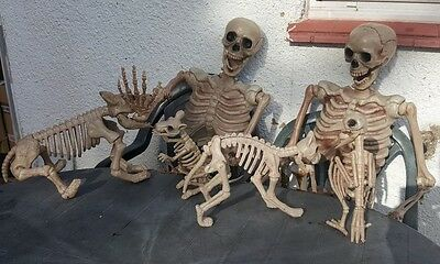 Halloween 5ft giant life size poseable skeleton + dog ,cat ,bird, rat