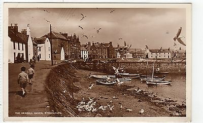 THE SEAGULL HAVEN, STONEHAVEN: Kincardineshire postcard (C8664)