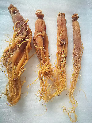 Whole Panax Korean Red Ginseng Roots,RARE,6 year NOT Extract capsules tea Powder