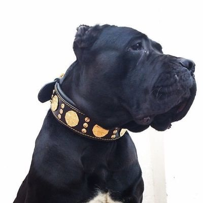 Bestia Maximus leather dog collar. Hand made in Europe. Top quality. L-XXL