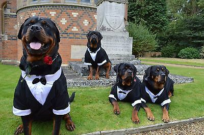 Dog Tuxedo for Large Breed Dog Formal Costume UK
