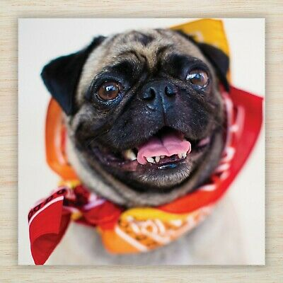 PERSONALISED FAWN PUG DOG BIRTHDAY CARD Top Quality Colour Illus Middle Insert