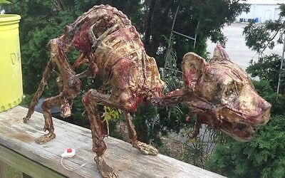 Realistic Prop  Creepy Halloween Fleshy Motion Activated Cat Skeleton .