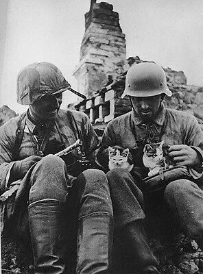 WWII B&W Photo German Soldiers with Kittens Aug. 1943  World War Two  WW2 / 2346