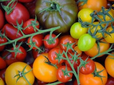 "Tomato Seeds ""Mixed"" (50 Seeds) Excellent Selection"