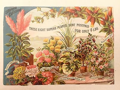 Victorian Era Vintage Large Advertisement For Surprise Plants & Flowers Print Ad