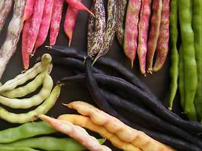 """Bean Seeds """"Mixed"""" (30 Seeds) Excellent Variety"""