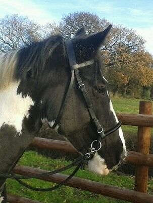 *NEW*Side Pull attachment to change a normal bridle into a bitless bridle*NEW*
