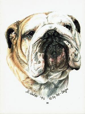 2 Aufkleber/Sticker Hunde English Bulldog [r069]