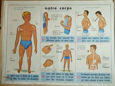French vintage poster school human body boy