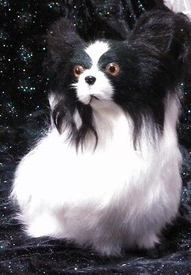 Lifelike black white Papillon dog made of real fur  10x10 inches looks REALISTIC