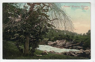 LOVERS' WEEPING WILLOW, OMAGH: Co Tyrone, Northern Ireland postcard (C12527)