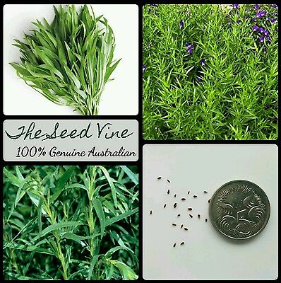 50+ RUSSIAN TARRAGON SEEDS (Artemisia dracunculus) Rare Cooking Savoury Herb
