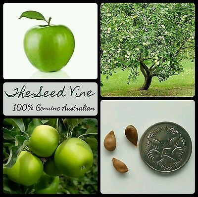 10+ GRANNY SMITH APPLE TREE SEEDS (Malus 'Granny Smith') Juice Cooking Pie