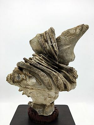 Natural polished Viewing stone suiseki-old collection amazing Textured Rough