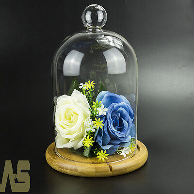 Christmas Glass Display Cloche Bell Jar Dome With Wooden Base Crafts DIY