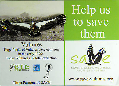 RSPB Pin Badge | Vulture large | Save the Vulture Campaign [00670]