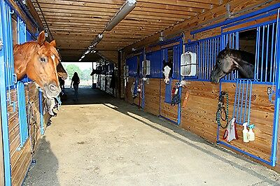 Softwood Chip Equestrian Bedding Chippings Wood Chips 1000 Litre Bag