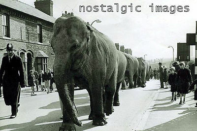 PHOTO TAKEN FROM A 1950 's IMAGE - POLICE OFFICER ESCORTING CIRCUS ELEPHANTS
